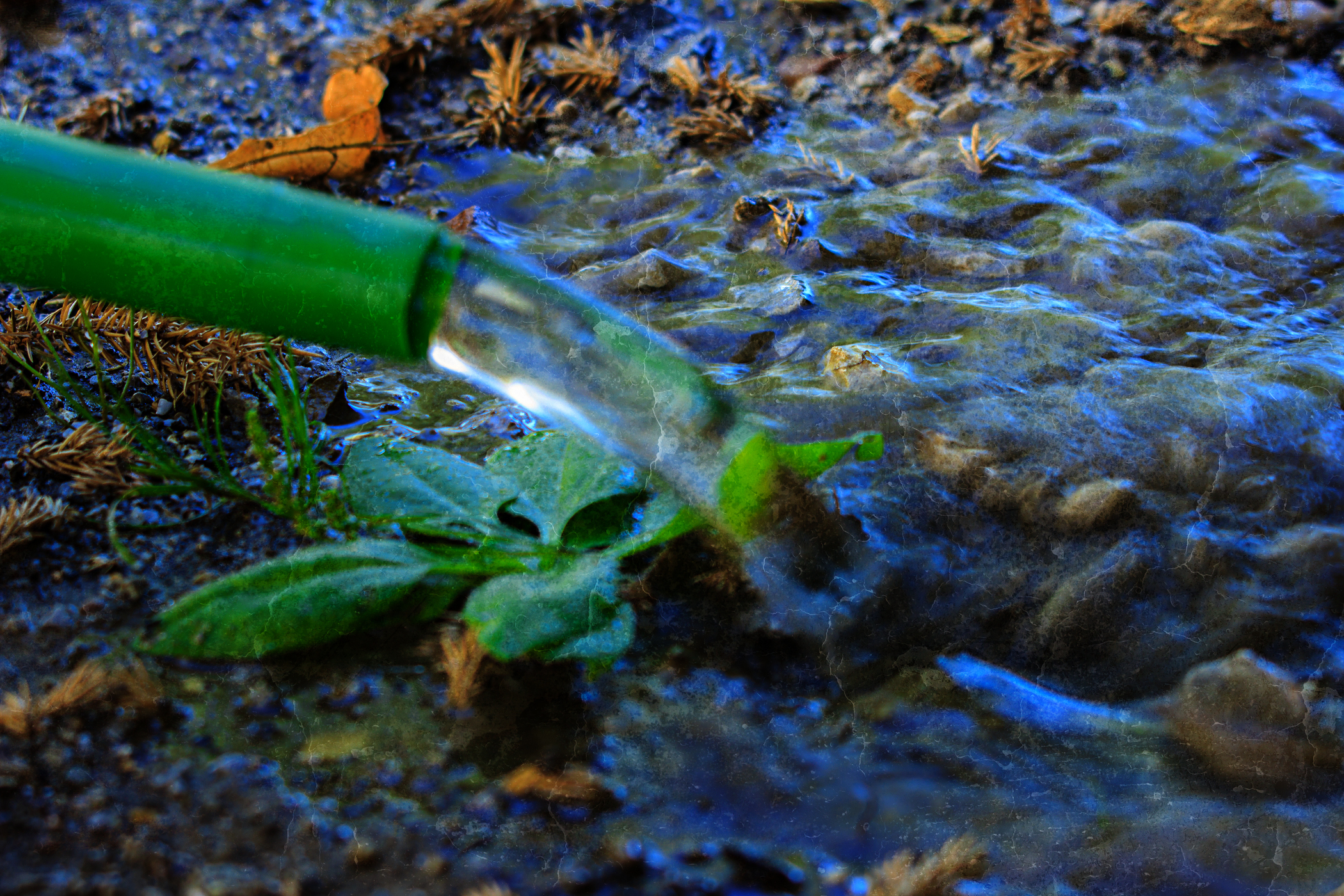 Gießkanne und Wasser